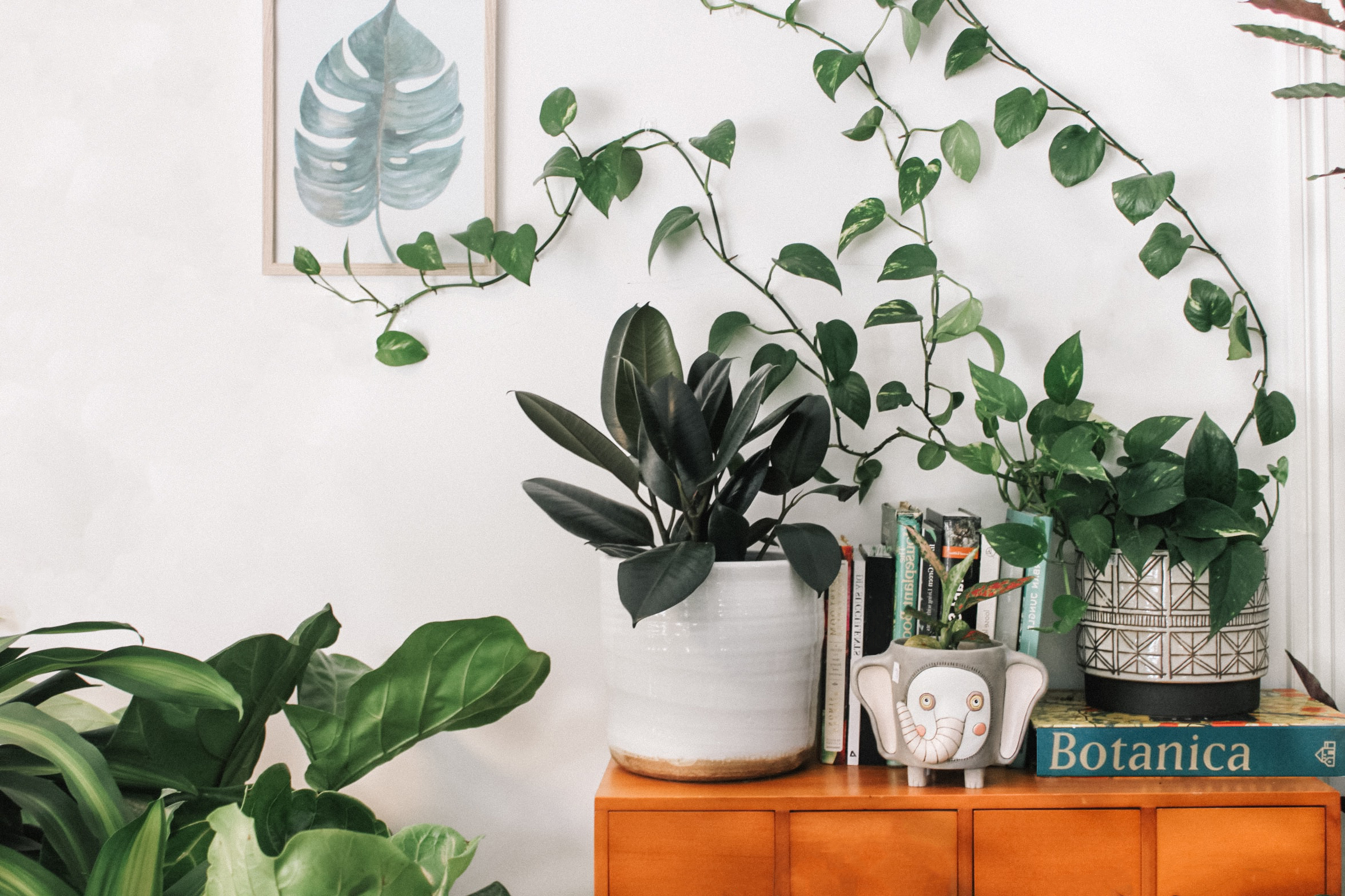The 7 Easiest Tropical Plants to Grow at Home